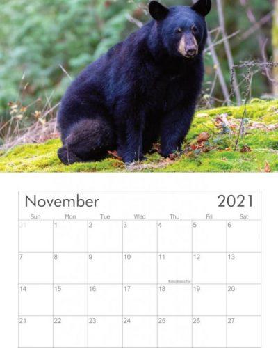 Books & Calendars