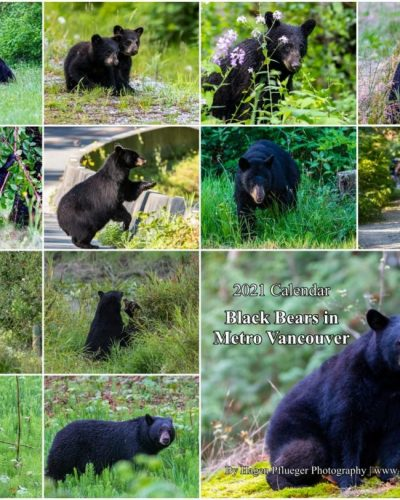2021 Calendar - Black Bears in Metro Vancouver