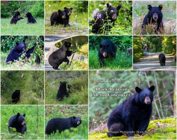 2021 Calendar - Black Bears in Metro Vancouver