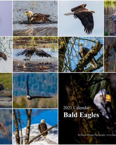 2021 Calendar - Bald Eagles in British Columbia